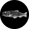 Image de la categorie Sur l'étal : poissons & co de Eulalie Poissonnerie
