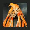 Langoustine crue (200g)